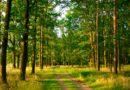 О «Зелёном щите» области