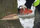 Осужден за незаконную рубку лесных насаждений