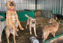 Приюту для животных грозит штраф